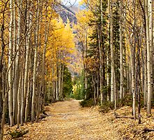 Golden Road by Ken Fleming