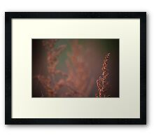 Do we focus on the right things Framed Print
