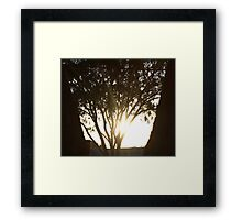 Bright Shadows Framed Print