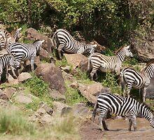 """zebra crossing"" by roger smith"
