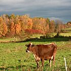 Fall in Upstate NY by kremphoto