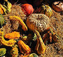 Gords & Pumpkins by teresa731