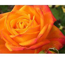 luminous rose  Photographic Print