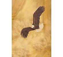 Bald Eagle - Wood Art Photographic Print
