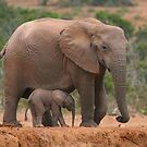 Mother and Calf by naturalnomad