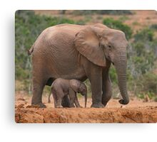 Mother and Calf Canvas Print