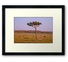 masai mara landscape Framed Print