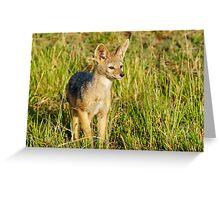 jackal pup Greeting Card