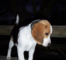 Beagle Baby by ariete