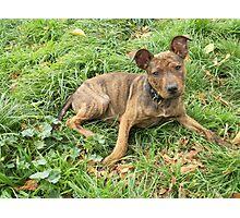 Crossbreed pup Photographic Print