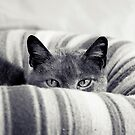 Peeking Over II by Josie Eldred