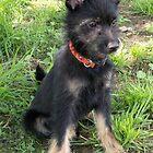 Terrier Pup by ariete