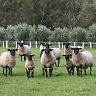 Suffolk Ewes And Lambs by Jenny Brice
