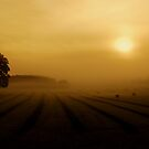 """""""LIGHT THROUGH THE MIST 2"""" by snapitnc"""