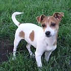 Terrier Puppy by ariete
