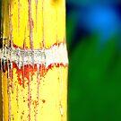 Colour Of Life XXIX by Damienne Bingham