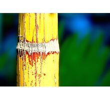 Colour Of Life XXIX Photographic Print