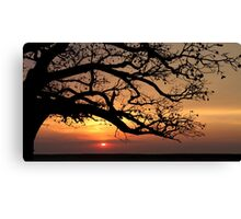 Below the Branches Canvas Print