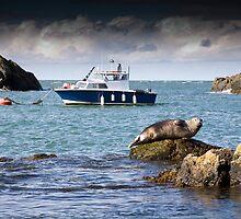 Ynysoedd y Moeirhoniaid (The Skerries) Boat and Seal by Raymond Kerr