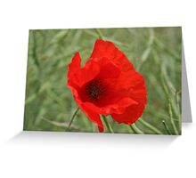Single Red Poppy Greeting Card