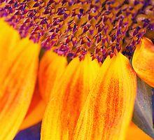 Sunflower III by Silvia Ganora