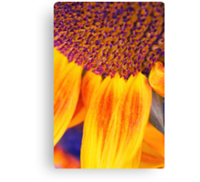 Sunflower III Canvas Print