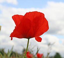 Single Poppy against blue sky by NKSharp