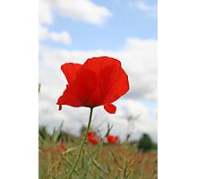 Single Poppy against blue sky Photographic Print