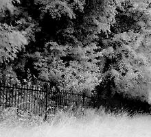 Metal Fence in Phoenix Park, Dublin by Dave  Kennedy