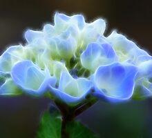 Hydrangea by Lynn Bolt