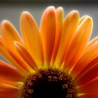 Orange Daisy by Hilary Walker