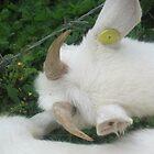 Hey look at my horns..still small....grrrrrrr... by True Cinema Movement