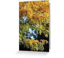 Fall Greeting Card