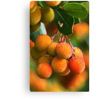 Strawberry Tree Fruits Canvas Print