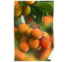 Strawberry Tree Fruits Poster