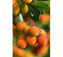 Strawberry Tree Fruits Photographic Print