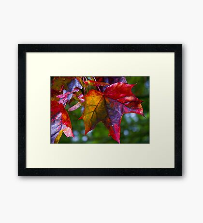 Autumnal leaf Framed Print