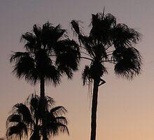 Palm Silhouette iPhone Case by Judi FitzPatrick