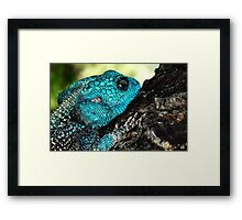 Who is the fairest of them all?? Framed Print