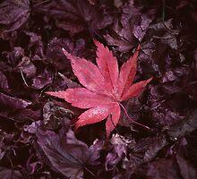 Changing Seasons by Matthew Pugh
