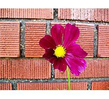 Maroon Flower Macro Photographic Print