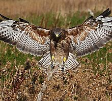Spreading His Wings! by Mark Hughes