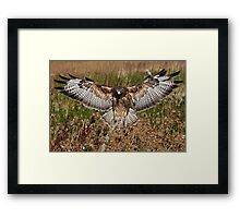 Spreading His Wings! Framed Print