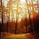 Autumn Road by vividpeach