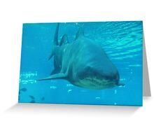 Sharks tail Greeting Card