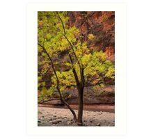 Cottonwood Tree, Zion Canyon Art Print