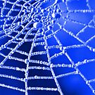Frosted Spider Web  by Margaret S Sweeny