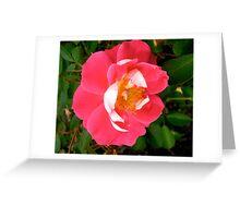 Governor General's rose 6 Greeting Card