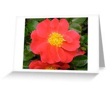 Governor General's rose 7 Greeting Card