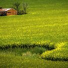 Among the Canola by Bette Devine